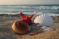 Free Sea Star And Shell Royalty Free Stock Photo - 32493135