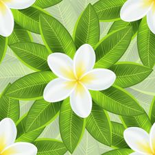 Free Spring Ecological Background With Beautiful White Royalty Free Stock Images - 32498759