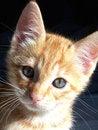 Free Orange Kitten Stock Photos - 3257443