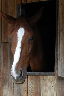 Free Brown Horse Portrait Stock Image - 3250241
