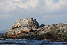 Free Sea Lion Stock Photos - 3250913