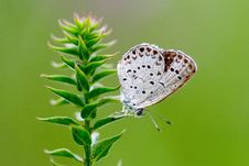 Free Butterfly On The Grass Stock Images - 3252164
