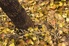 Free Yellow Leaves In Xixi Wetland Stock Photography - 3253252