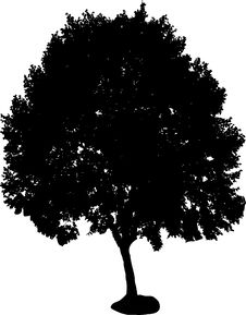 Free Tree Silhouette Royalty Free Stock Photo - 3253285