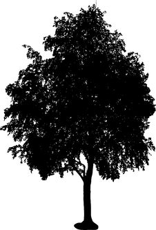 Free Tree Silhouette Royalty Free Stock Photography - 3253287
