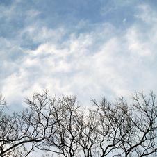 Free Barren Trees Stock Photo - 3253310