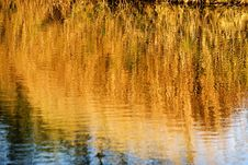 Free Bulrush Reflects In Water Royalty Free Stock Image - 3253326