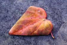 Free Autumn Leaf Royalty Free Stock Photography - 3253337