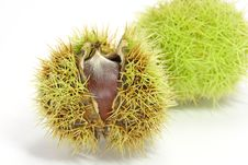 Free Chestnuts Stock Images - 3253554