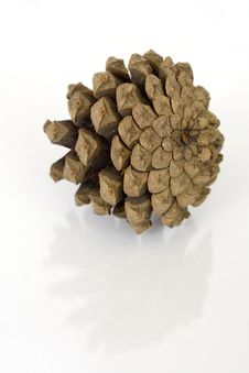 Free Pine Cone Isolated Over White Royalty Free Stock Photography - 3254537