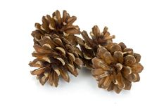 Free Pine Cones Isolated Over White Stock Photo - 3254540