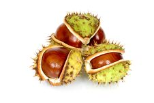 Free Chestnuts Close Up Isolated Stock Photography - 3254552
