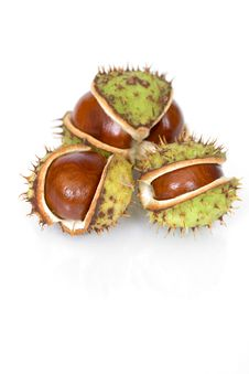 Free Chestnuts Close Up Isolated Stock Photos - 3254553