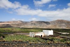Free Cactus Farm In Lanzarote Royalty Free Stock Photography - 3254777