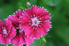Free Purple Flower Stock Photo - 3254870