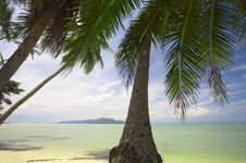 Tropic Palm Stock Images