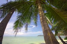 Free Palms And Ocean Stock Photos - 3255133