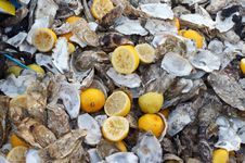 Free Oysters Disposals Royalty Free Stock Image - 3255986