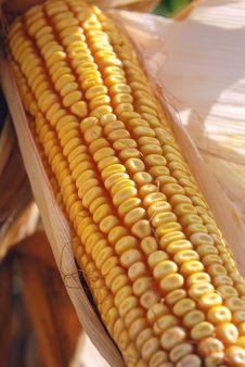 Free Corn Ear Stock Photo - 3256350