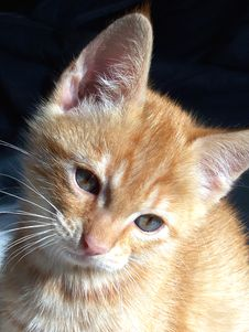 Free Orange Kitten Stock Photography - 3256352