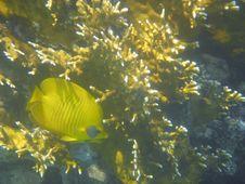 Free Anralfish Red Sea Egypt Africa Royalty Free Stock Photos - 3256608
