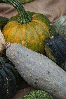 Free Pumpkins Royalty Free Stock Photos - 3256968