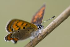 Free Butterfly Stock Photo - 3257160