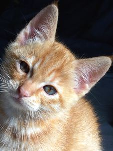 Free Orange Kitten Stock Photo - 3257440