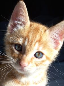 Free Orange Kitten Stock Photos - 3257443
