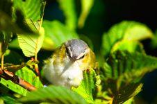 Free Bird Closeup Stock Photography - 3258052