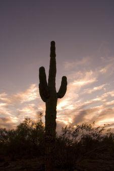 Free Saguaro Cactus Sunset Royalty Free Stock Image - 3259906