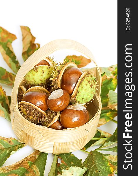Chestnuts close up isolated