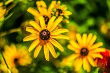Free Flowers Stock Image - 32502741