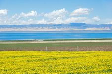 Free Qinghai Lake Scenery Royalty Free Stock Image - 32527516