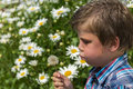 Free Boy Blowing Dandelion Stock Photography - 32549762