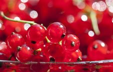 Close Up On Red Currants Stock Images