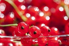 Close Up On Red Currants Royalty Free Stock Image
