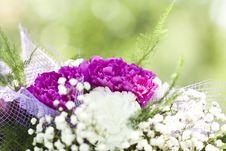 Free Bouquet Stock Photos - 32547183