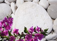 Free Pebble And Flower Royalty Free Stock Photos - 32551298