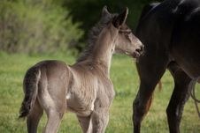 Free Foal Royalty Free Stock Photography - 32551537
