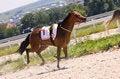 Free Horse Racing. Stock Photo - 32561240