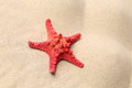 Free Red Starfish On A Sand Background. Stock Photography - 32571052