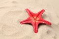 Free Red Starfish On A Sand Background. Close Up. Royalty Free Stock Photos - 32571158