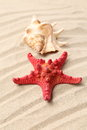 Free Red Starfish And Shell On Sandy Background Royalty Free Stock Photography - 32571267