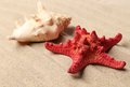 Free Red Starfish And Shell On Sandy Background Royalty Free Stock Photo - 32571275