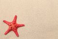 Free Red Starfish On A Sand Background. Stock Images - 32571374