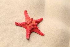 Red Starfish On A Sand Background. Stock Photography