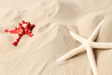 Free Red And White Starfishes On A Sand Background. Royalty Free Stock Image - 32571106