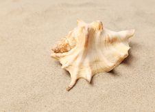 Free Conch Shell Over Sand. Sandy Background. Close Up. Royalty Free Stock Photos - 32571198