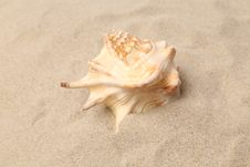 Free Conch Shell Over Sand. Sandy Background. Close Up. Stock Images - 32571214